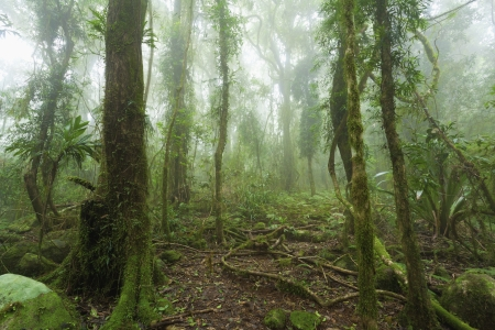 Mossy, humid australian rainforest enveloped in clouds