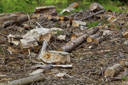 deforestacion: Primer plano de la deforestación en los bosques alpinos Foto de archivo