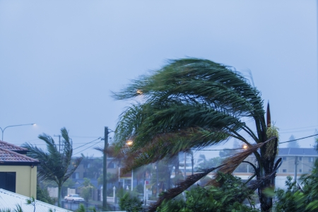 strong wind: Palm tree in cyclonic wind Stock Photo