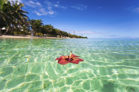 Hibiscus floating off tropical Fiji island Stock Photo