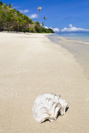 Shell on tropical Fiji beach Stock Photo - 19254398