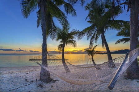 tropical paradise: Tropical paradise beach at sunset with hammock