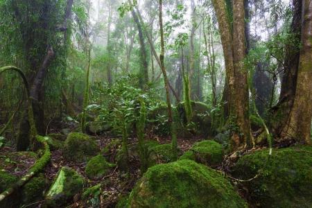 Lush australian rainforest