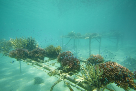 Coral regenaration on tables Stock Photo - 20238350