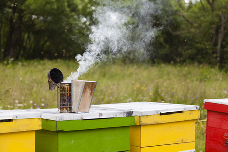 beekeeper: Bee smoker on colourful beehives