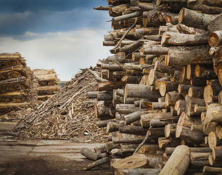 Log and wood piles in industrial timber factory. photo