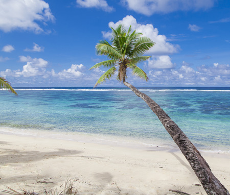 samoa: Tropical Samoa with white sandy beaches and coconut palms Stock Photo
