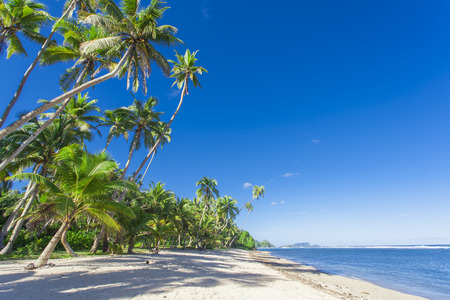 Tropical Samoa with white sandy beaches and coconut palms photo