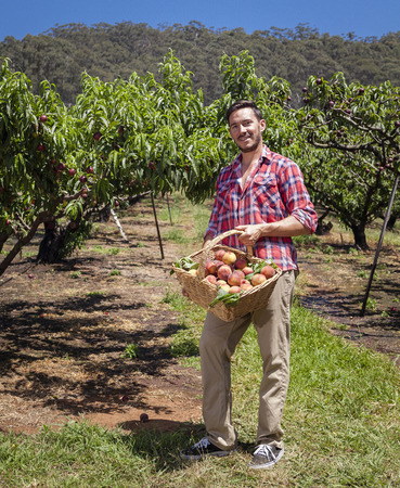 joven agricultor: Agricultor joven con la cesta de melocotones reci�n elegido Foto de archivo