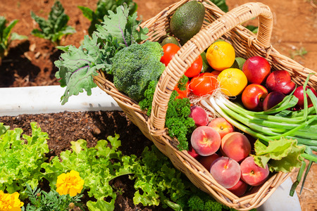 a crop: Basket of fresh organic fruit and vegetables in garden Stock Photo