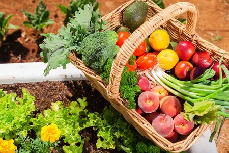 Cesto di frutta fresca e verdura biologica in giardino