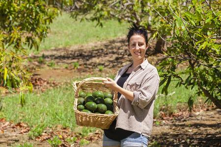 Junger Landwirt mit frisch gepflückten Feld von Avocados Standard-Bild - 33706691