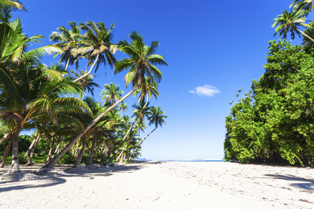 samoa: Coconut palms on beautiful isolated Samoan beach Stock Photo