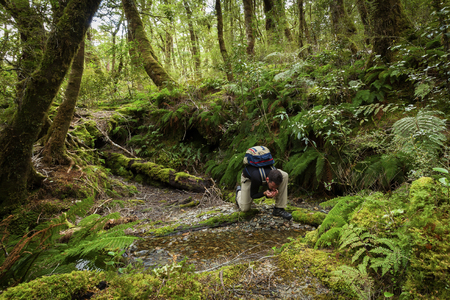 Hiker in pristine New Zealand forest