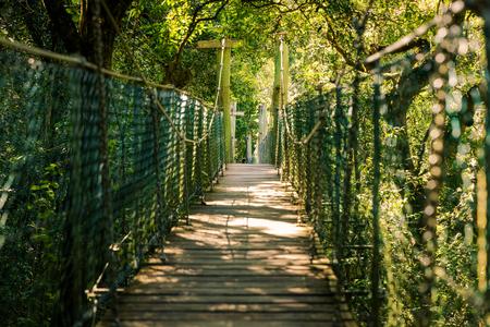 Suspended rainforest walk in the Gold Coast Hinterland, Queensland, Australia Stock Photo