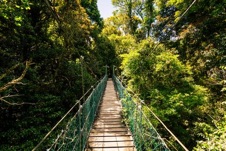 Suspended rainforest walk in the Gold Coast Hinterland, Queensland, Australia Lizenzfreie Bilder
