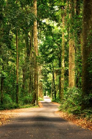 Straße im dichten Regenwald, Queensland, Australien
