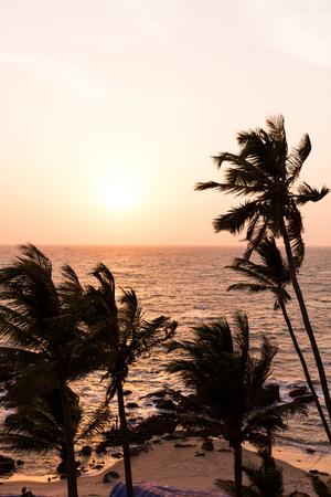 Sunset behind palm trees on Arambol Beach, Goa, India