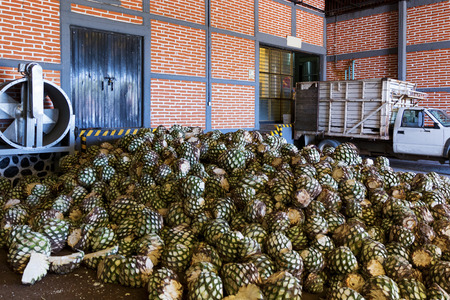 Agave piles in distillery waiting for processing, Tequila, Jalisco, Mexico