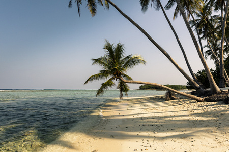 Palm trees on pristine tropical beach, Maldives