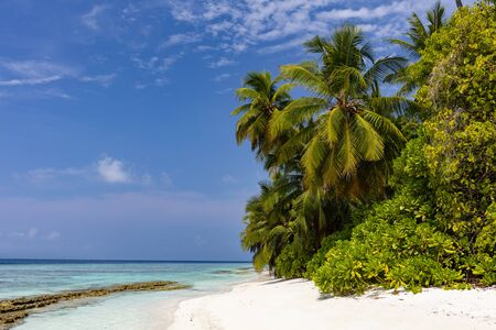 Pristine tropical beach with palm trees, blue water and white sand on a sunny day