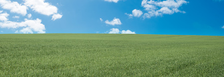 Panorama of green meadow and blue sky with white clouds Standard-Bild