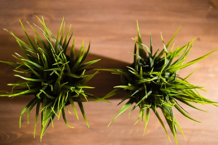 baseboard: Green grass plant in vintage pot decorating on old wooden background. Top view