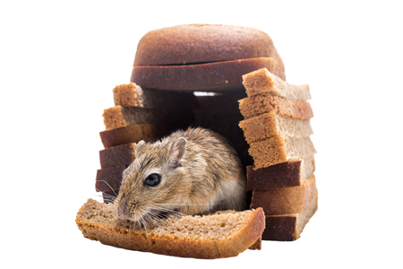 inducement: mouse sandwort eats bread in their bread house