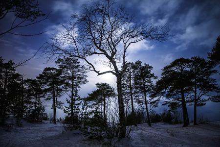 luz de luna: Bosque con una terrible árbol en el centro en la noche de invierno con la luna. Foto de archivo