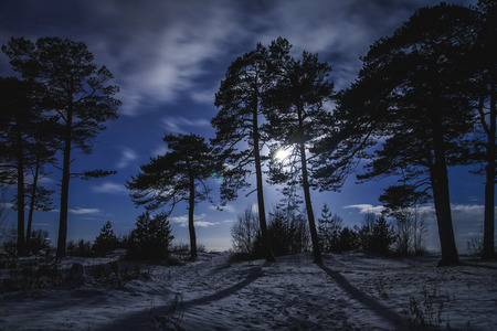 Forest with terrible tree in the centre  at winter night with moonlight.