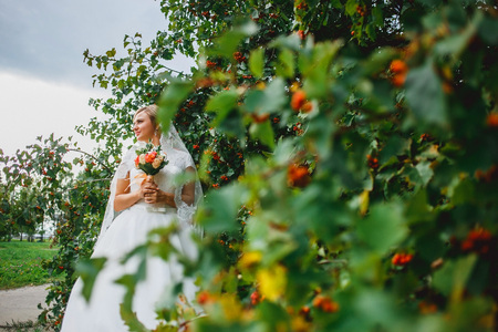 guelderrose: Beautiful bride in a wedding dress  near the bushes guelder-rose in a park