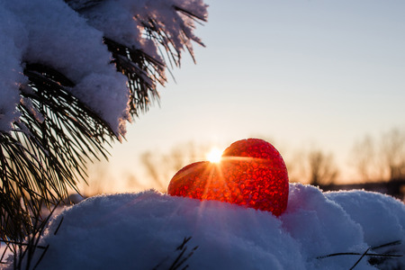covered in snow: Abstract heart on the branches covered snow in the rays of the winter sunset.