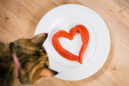 supervisi�n: Red caviar in the shape of a  heart on the plate and curious cat without supervision.