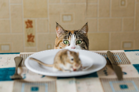 Cat playing with little gerbil mouse on the table with plate and serving cutlery. Concepts of prey, food, pest. 版權商用圖片 - 61839488
