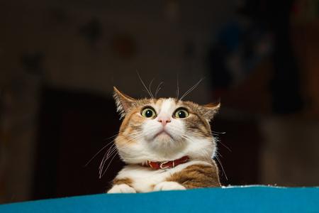 Pretty ginger cat pricked up ears in the alert. Standard-Bild