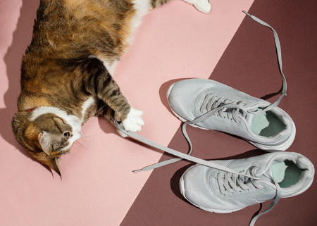 Pretty redhead cat playing with laces sneakers on pink and brown floor. Top view, flat lay 스톡 콘텐츠