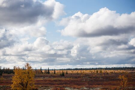 Beautiful panoramic landscape of forest-tundra, Autumn in the tundra. Yellow and red spruce branches in autumn colors on the moss background. Dynamic light. Tundra, Russia