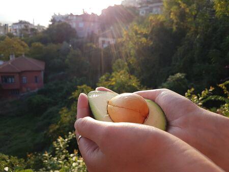 Fresh Avocado in the hands in sunlight