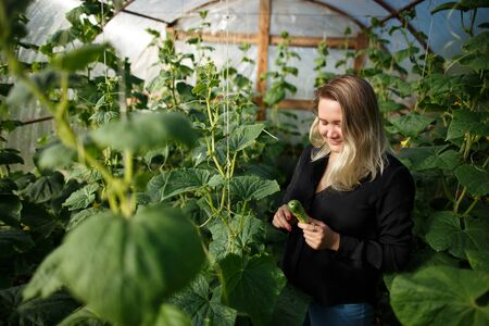 Young woman in a house greenhouse with cucumbers Stock fotó