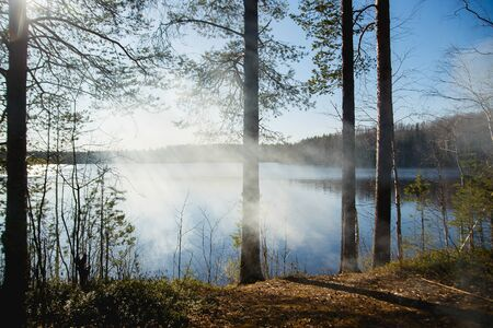 Pine forest and lake in fog on a sunny morning Archivio Fotografico