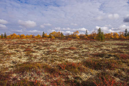Autumn tundra with deep sky with clouds, tundra plants in bright orange and red colors on a sunny day Stock Photo