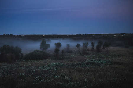 Cold fog on forest at night in moon light