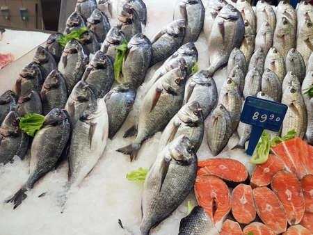 Fresh dorada and salmon on the counter