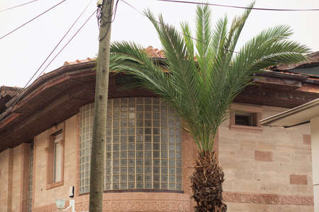 Palm and wall of mediterranean cottage with glass stained glass in rainy weather 免版税图像