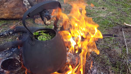 Tea from forest herbs is brewed in a kettle on a fire in the forest