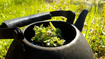 Tea from forest herbs in a kettle in the forest. Picnic concept
