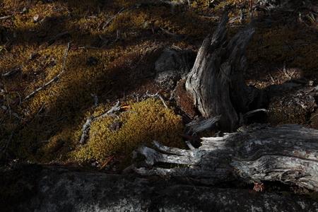 primeval forest: Primeval forest landscape