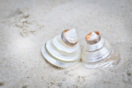 shells with wedding rings photo