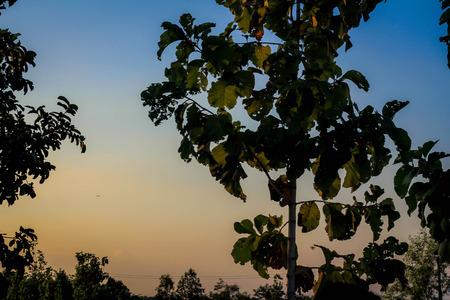 swaying: Trees swaying