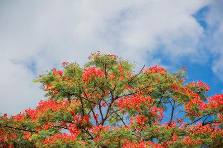 haulm: Sky at bright beautiful